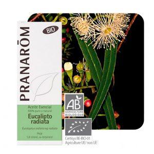 Aceite esencial Eucalipto radiata bio