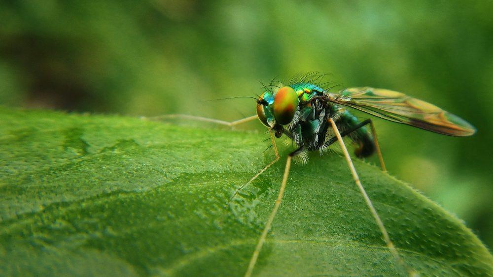 Spray antimosquitos verano